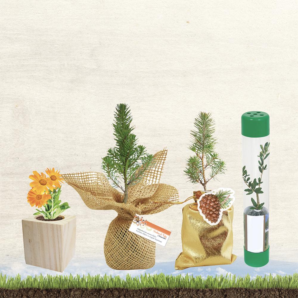 Bitki Yetiştirme Setleri